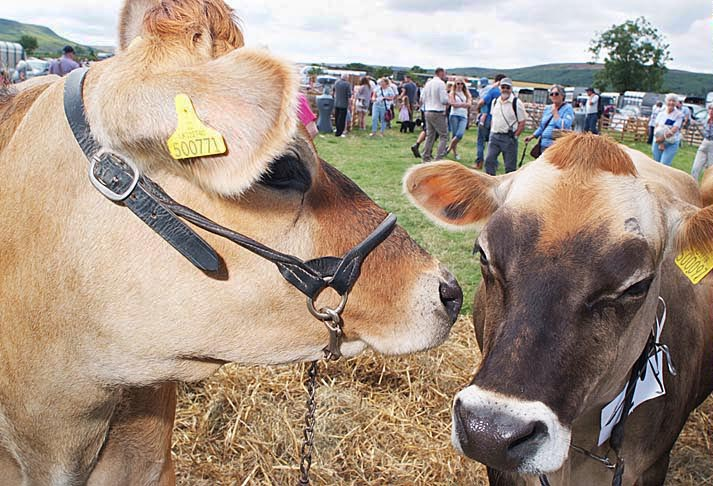 Danby Show Photo by David Eadington
